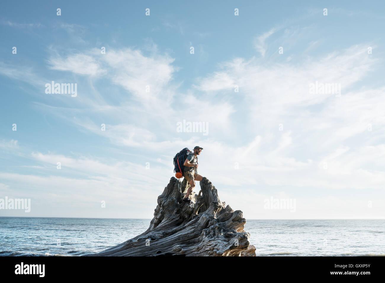 Eine Backpacker klettert einen toter Baumstumpf beim Wandern Northern California Lost Coast Stockbild