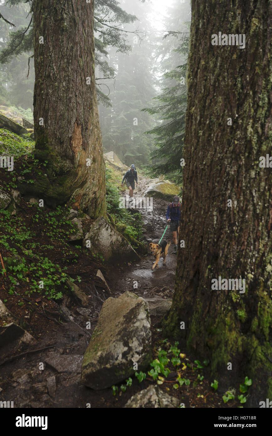 Wanderer Wanderung durch den Wald im Mount Pilchuck State Park in der Nähe von Seattle, Washington Stockbild
