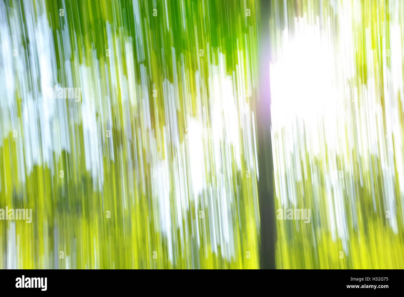 Geschwindigkeit Bäume Abstraktion Stockbild