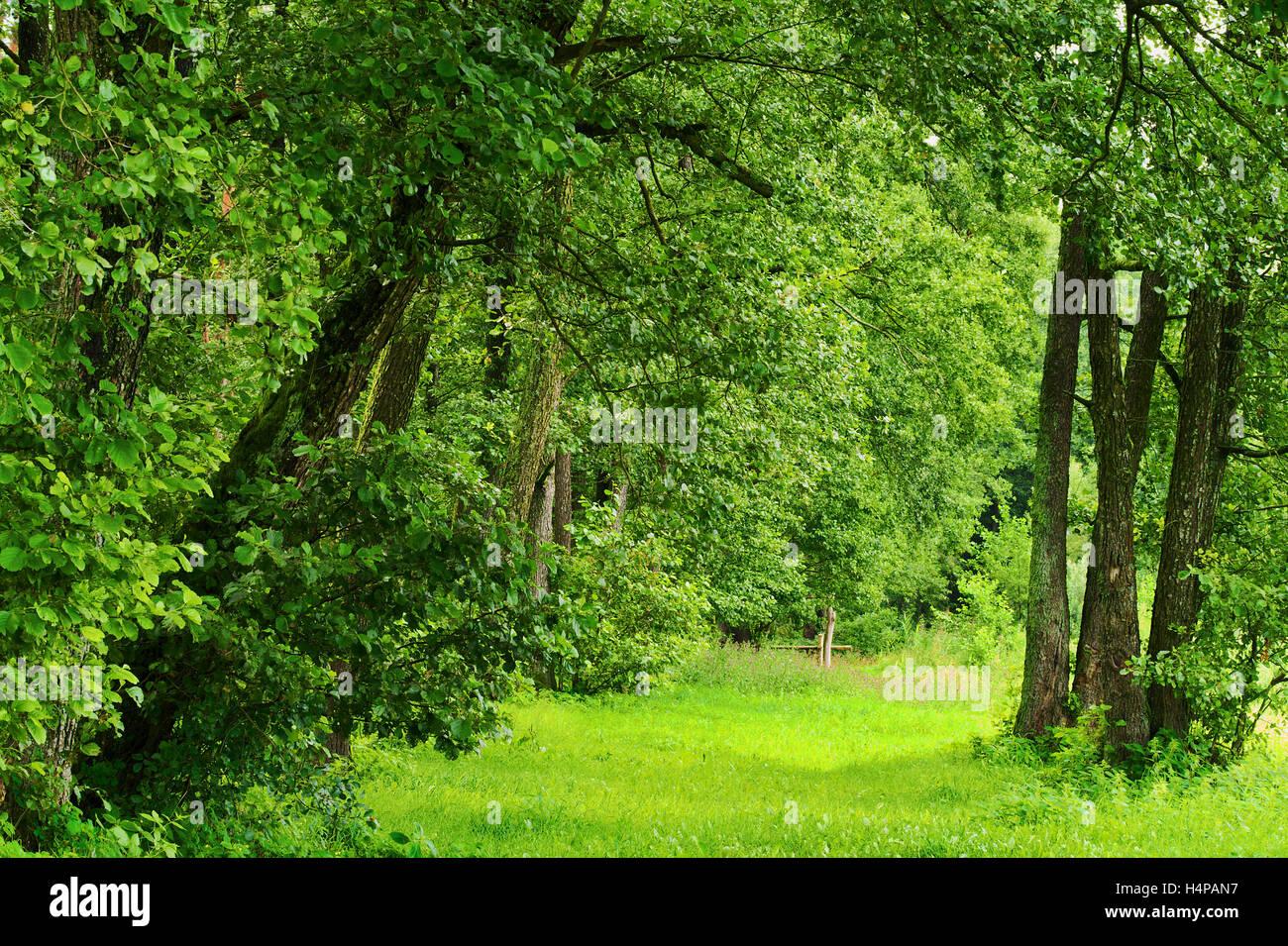 Grünen romantischen Lichtung oder Gasse in Laubwald wächst in Greenwood Podlaskie Provinz, Nord-Ost-Polen. Stockbild
