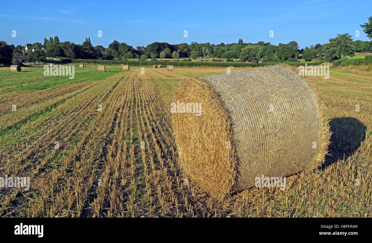 Laden Sie dieses Alamy Stockfoto Heuballen Sie Spätsommer in einem Feld, Moore, Warrington, Cheshire, England, UK - H8FHNW