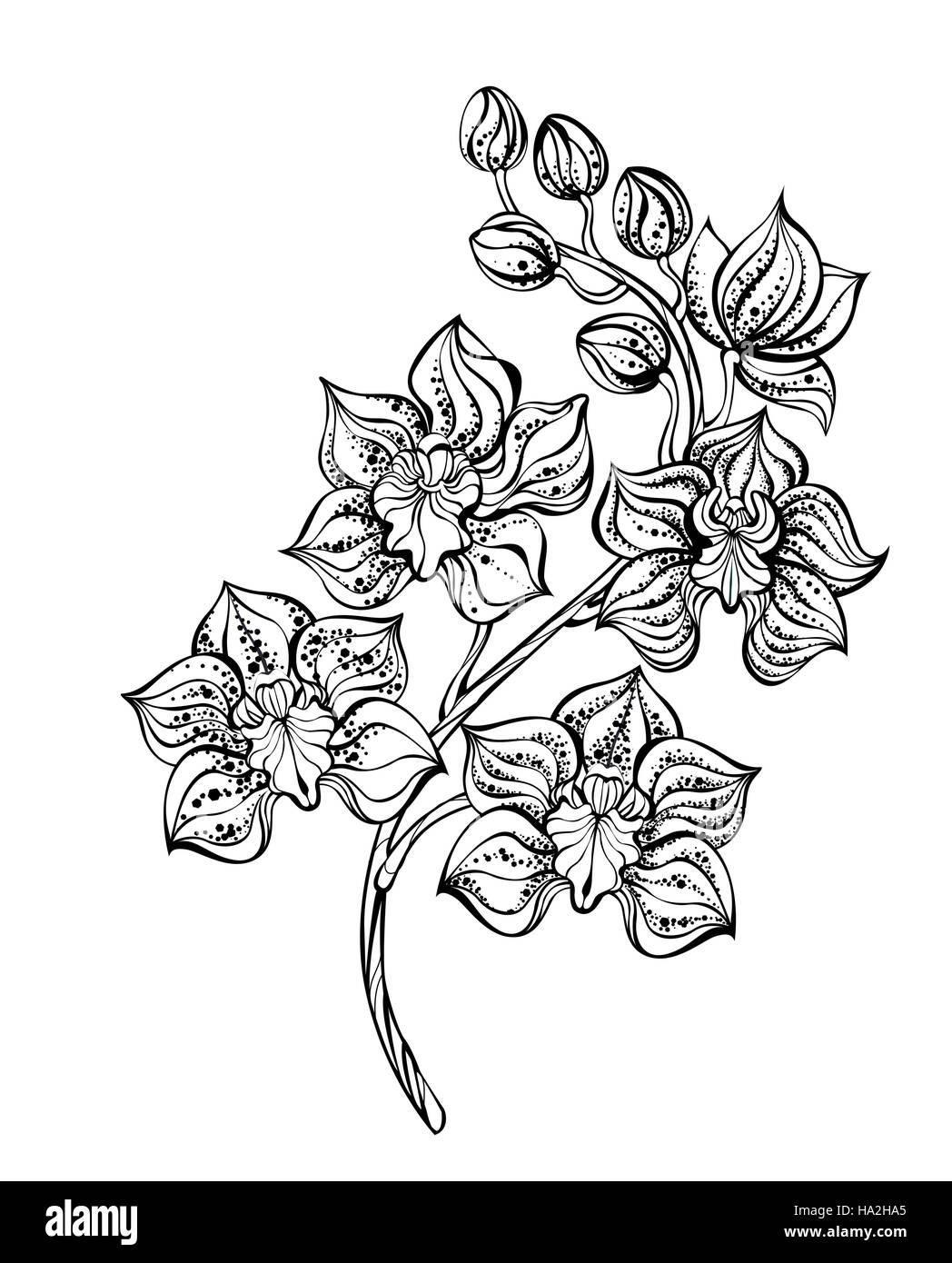 Künstlerisch Orchideen Tattoo Foto Von Kunstvoll Bemalten, Kontur, Schwarze Orchidee Auf Einem