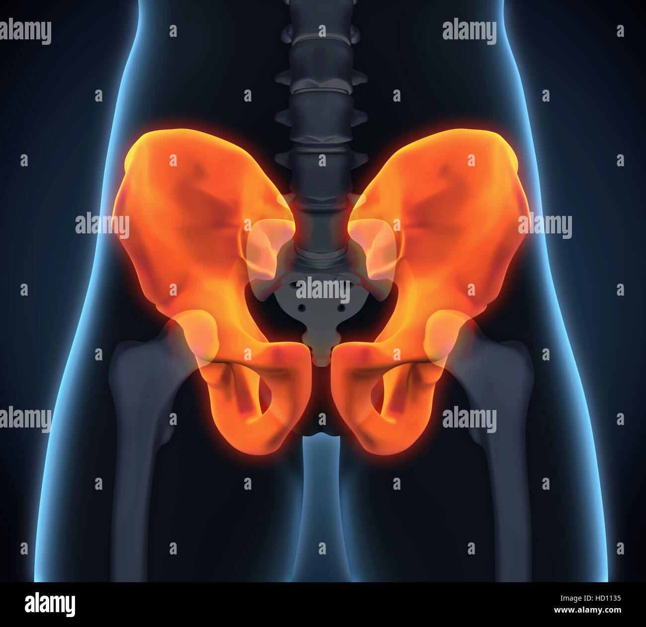 Hüftknochen Anatomie Stockfoto, Bild: 128485929 - Alamy