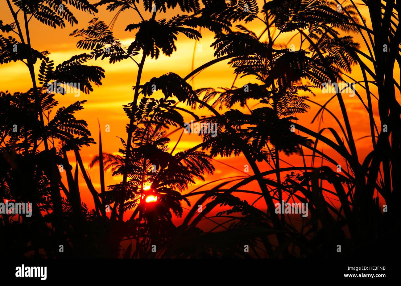 Sonnenuntergang Silhouette in Puchong, Malaysia. Stockbild