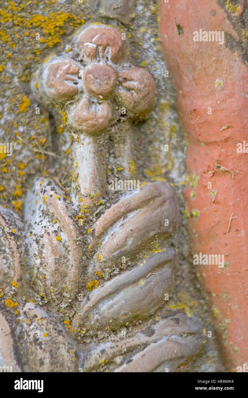 Bild einer Blume mit Moos auf einem Lehm eingebracht. Stockbild