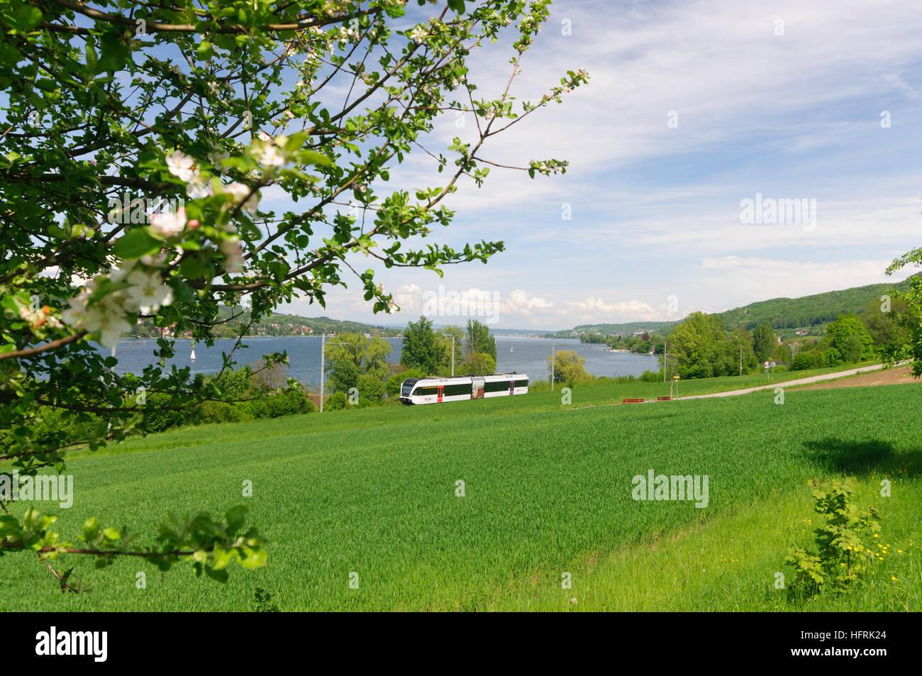 Mammern: Regionalbahn Thurbo an den Bodensee (Untersee), Thurgau, Schweiz Stockbild