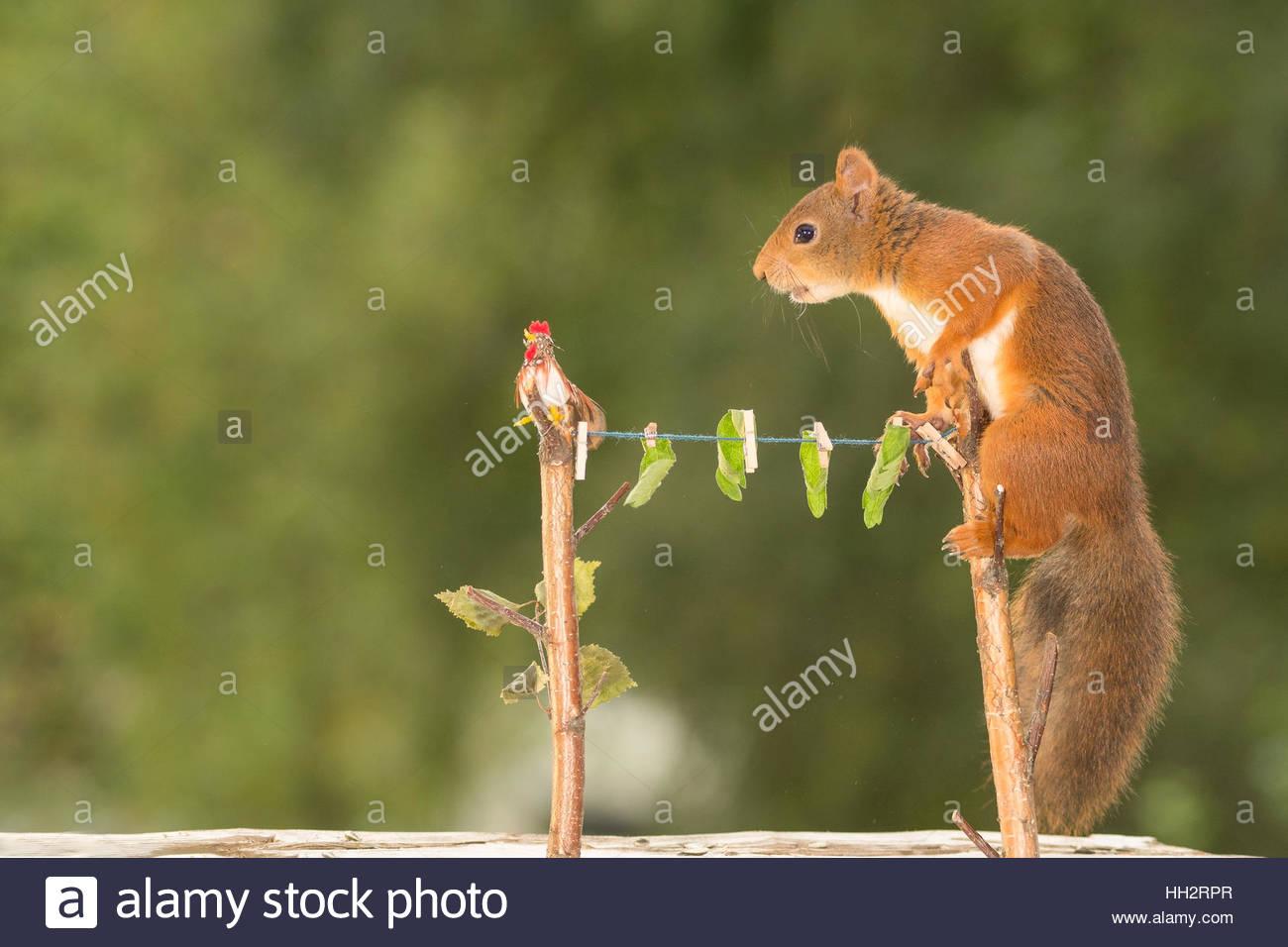 Groß Eichhörnchen Kauen Drähte Bilder - Die Besten Elektrischen ...