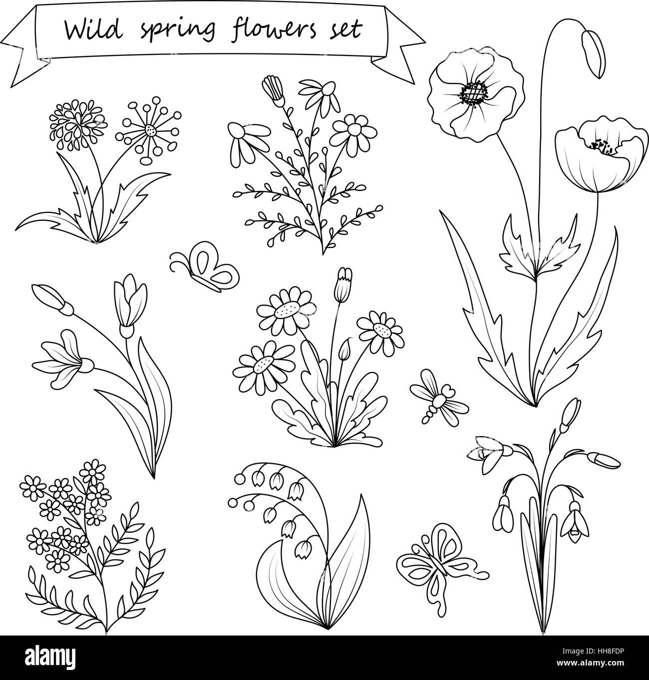 satz von hand gezeichnet wilden fr hlingsblumen vektor illustration botanik vintage blumen. Black Bedroom Furniture Sets. Home Design Ideas