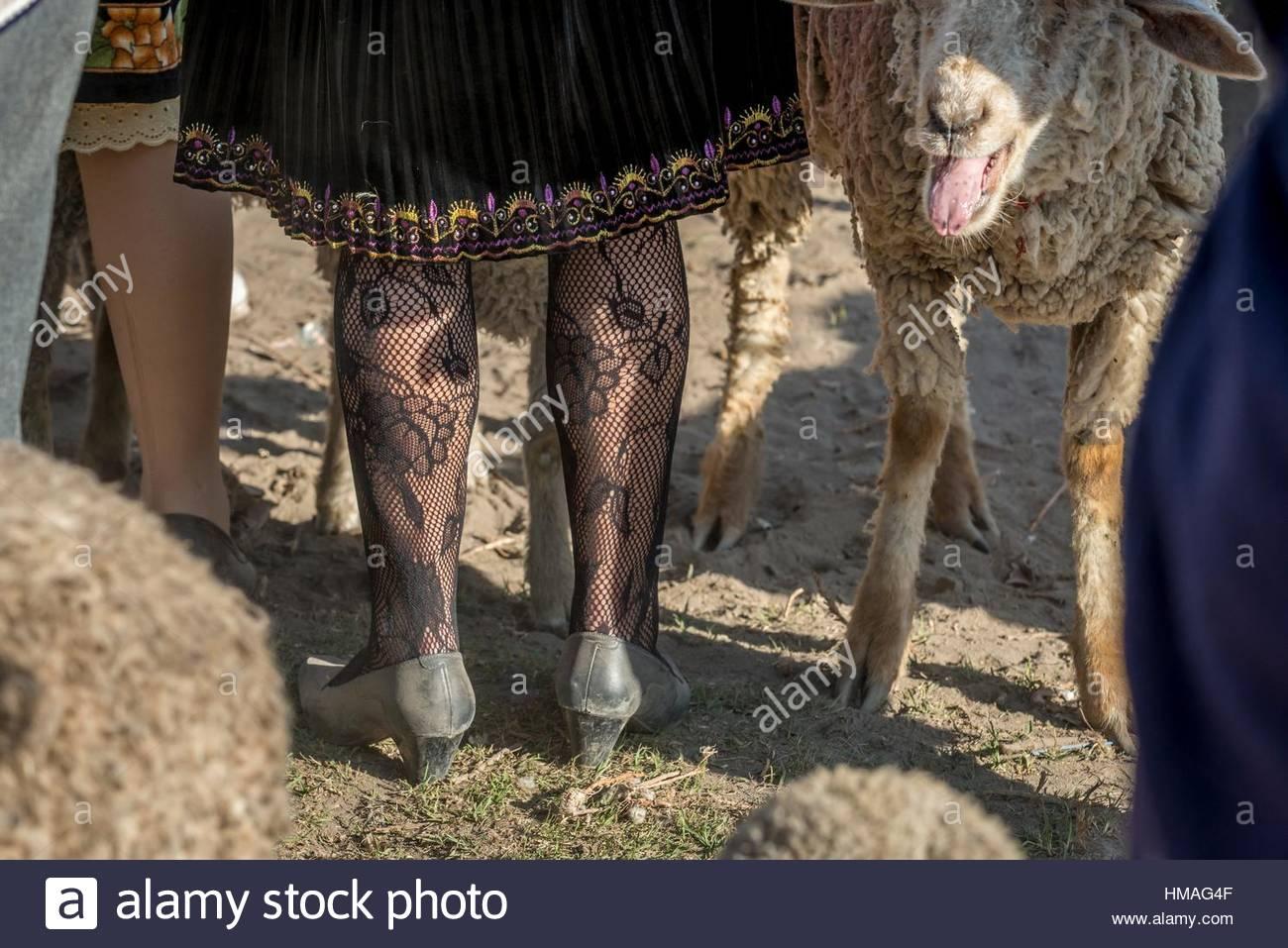 Der Sonntag Viehmarkt von pujilí, in der Provinz Cotopaxi. Zusammen bringen Völker aus allen in der Nähe Stockbild
