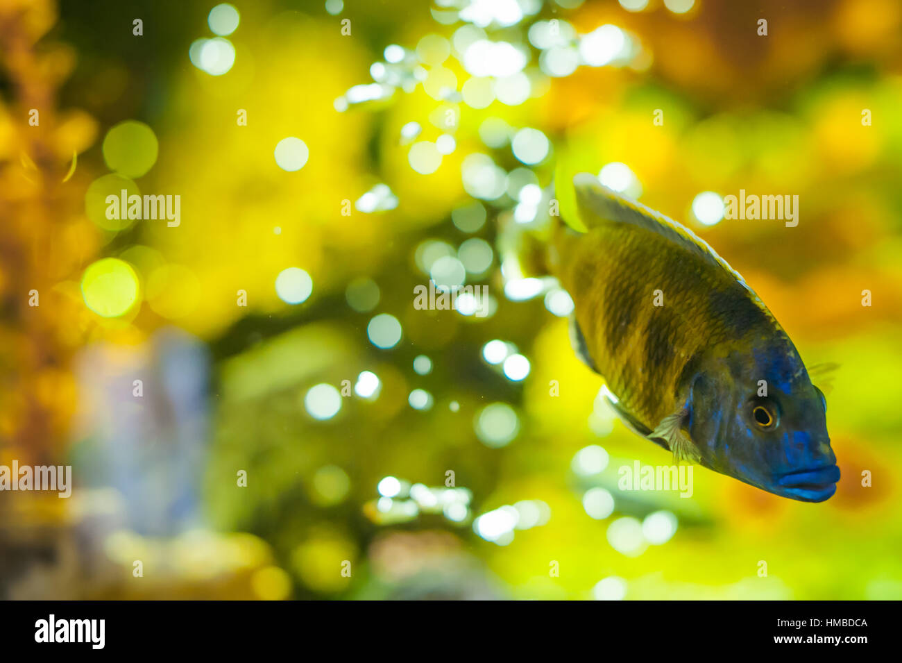 Pond fish rock stockfotos pond fish rock bilder alamy for Aquarium fische im gartenteich