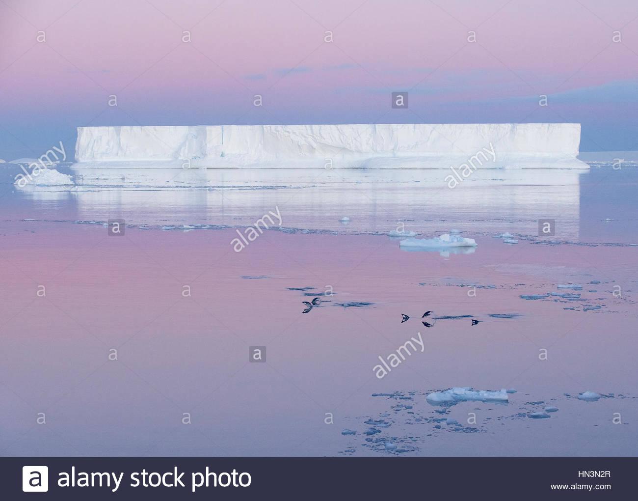 Adelie-Pinguine, Pygoscelis Adeliae in der Weddell-See vor einem tabellarischen Eisbergs. Stockbild