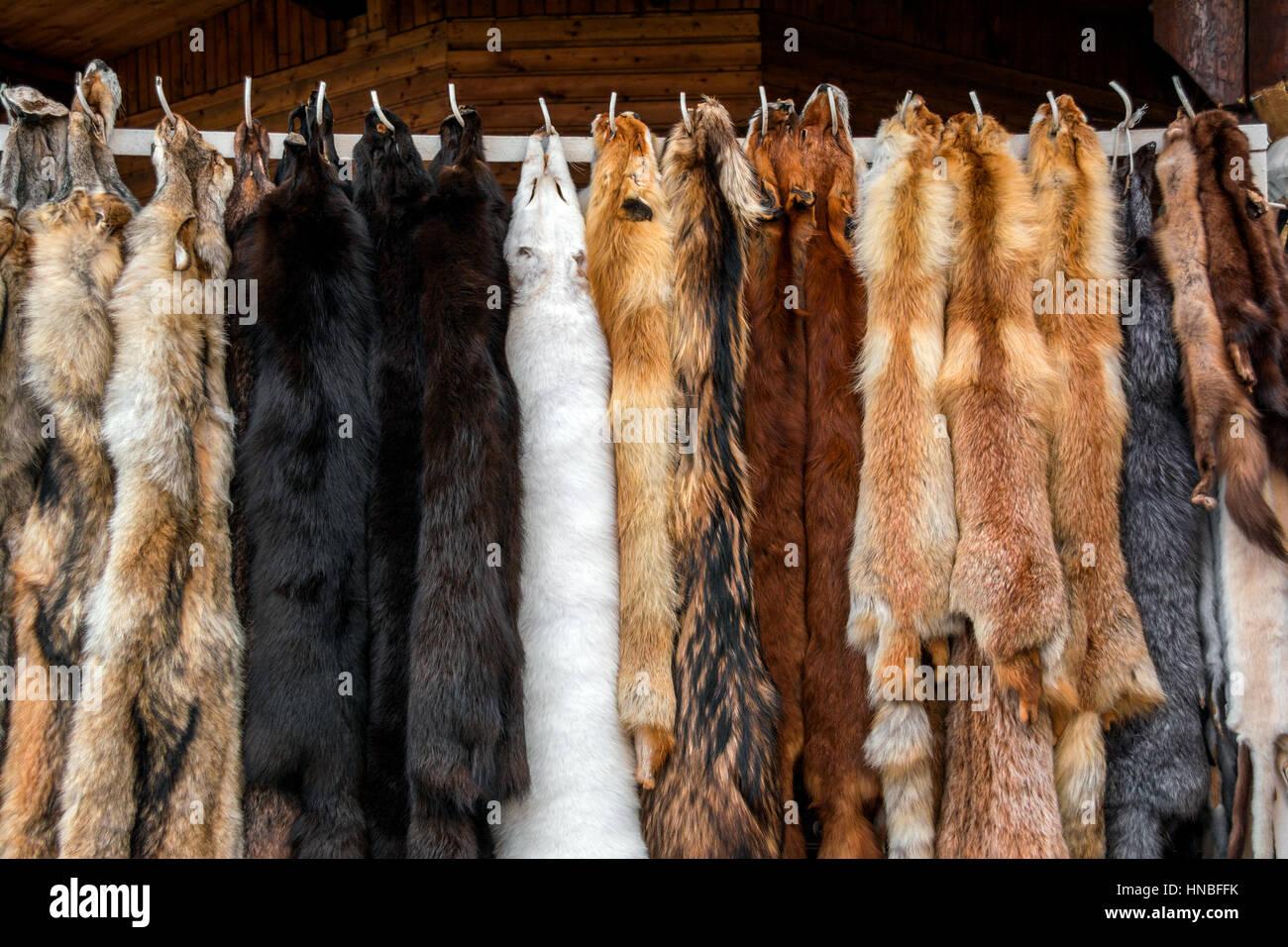 Pelze zu verkaufen, blendet gegerbte Stockbild