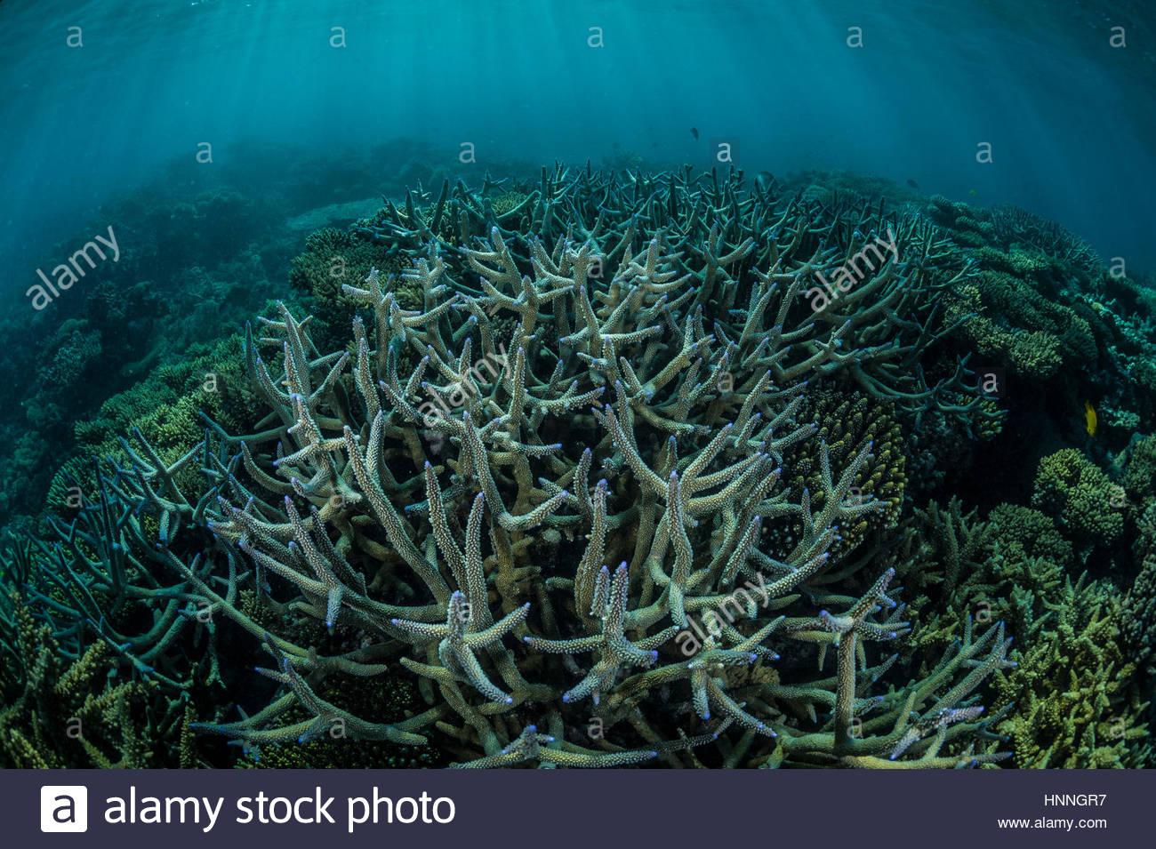 Korallen in der Ponta Oro Marine Reserve, Mosambik. Stockbild