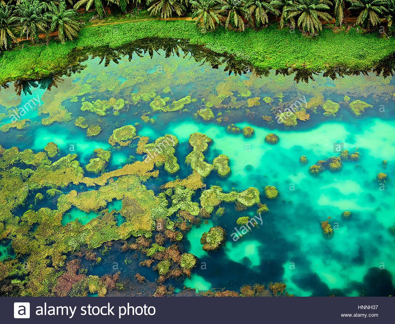 Eine Luftaufnahme fängt die üppigen Farben der Johor Landschaften, wie dieser Pool mit einem Feld von Stockbild