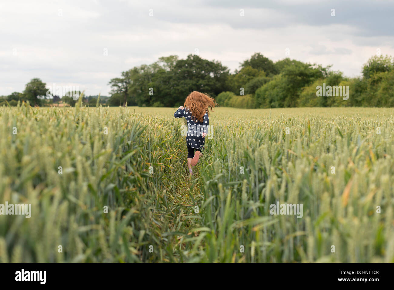 Ein kleines Mädchen mit roten Haaren läuft durch ein Weizenfeld. Stockbild
