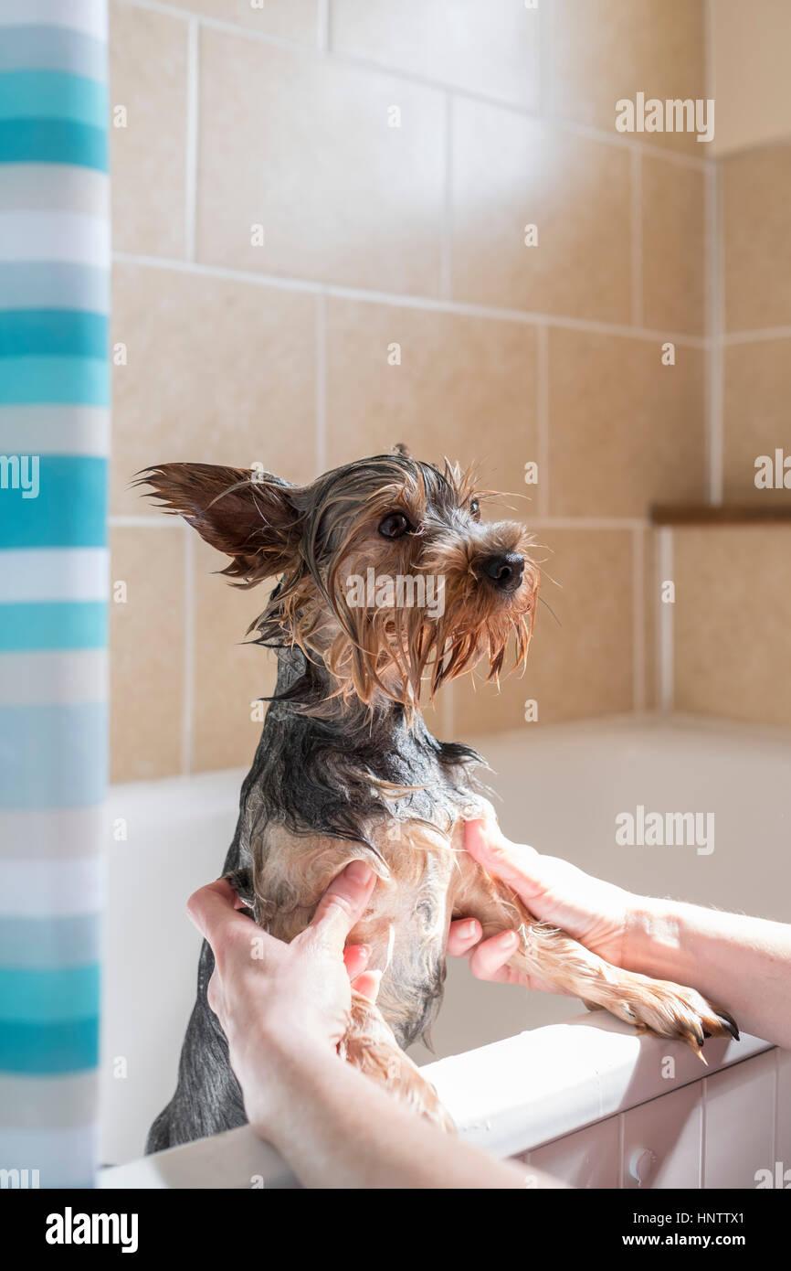 Ein Hund Baden Stockbild