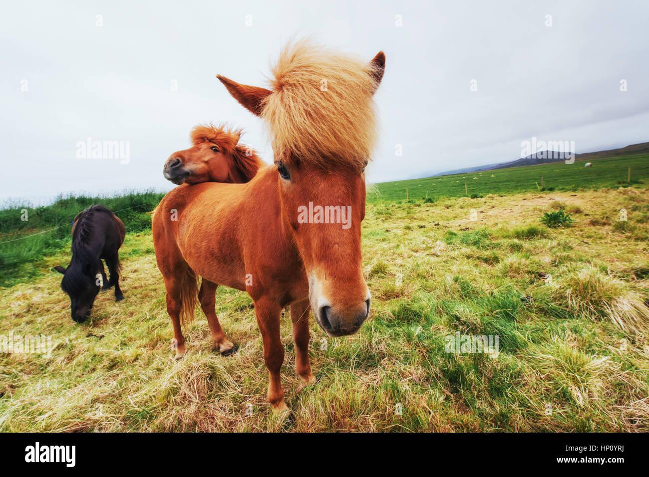 Pferde auf der Weide mit Blick auf die Berge Stockbild