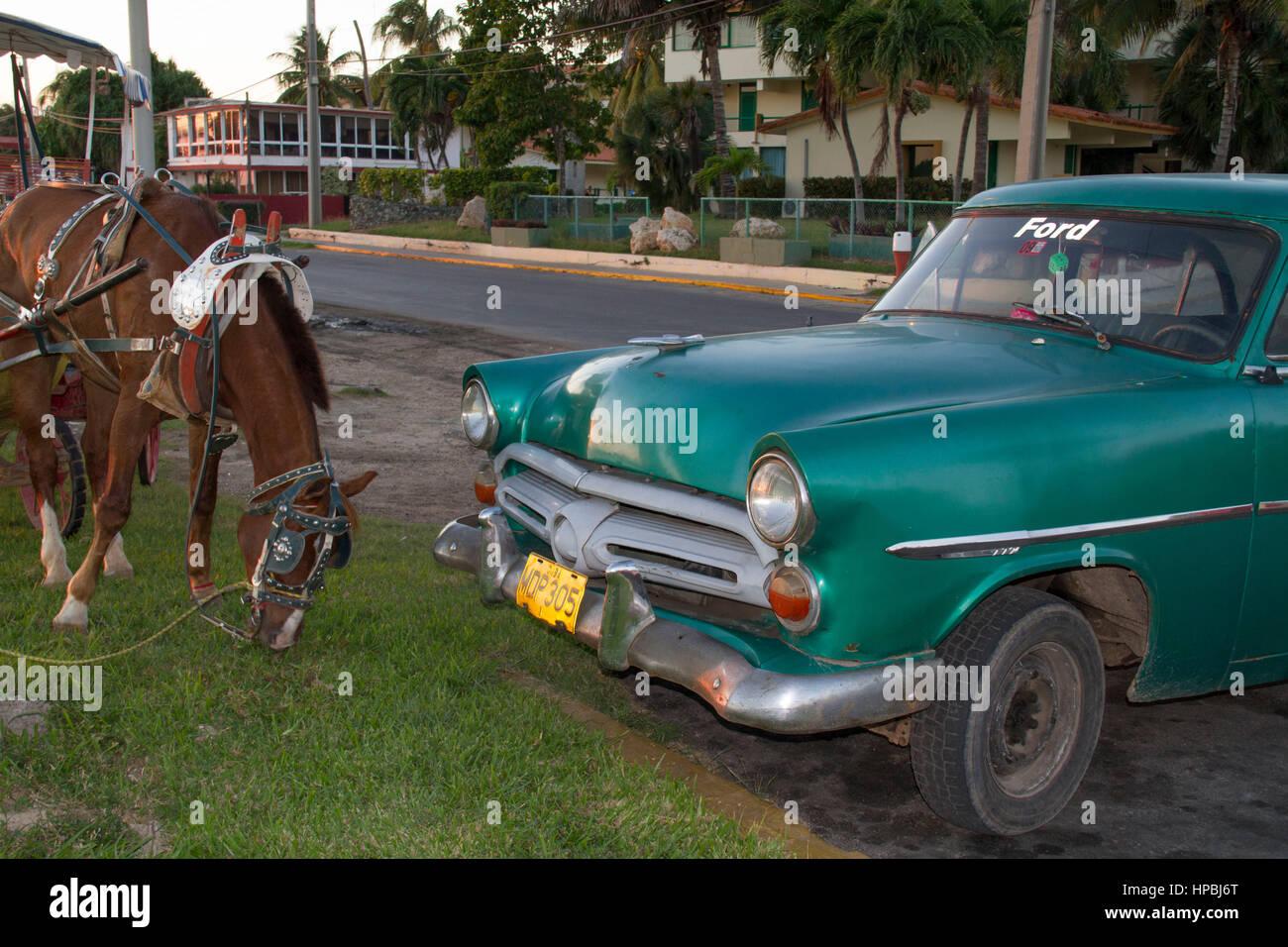 Ford Oldtimer, Pferd, Varadero, Kuba, Kuba Stockbild