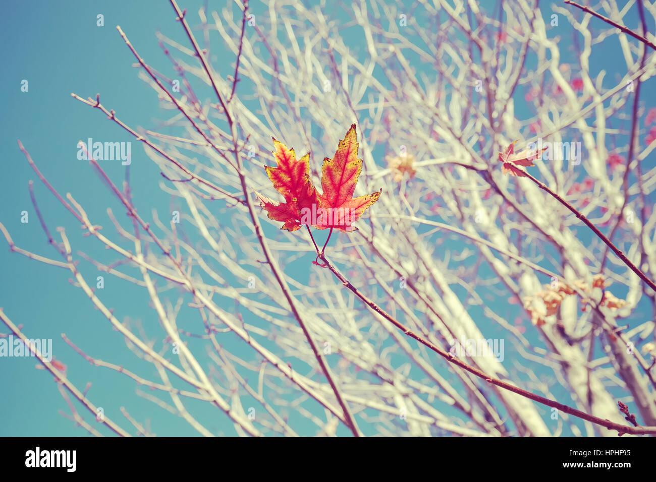 Retro-die stilisierte Abbildung des letzten Blätter am Baum, Tiefenschärfe, Natur Hintergrund. Stockbild