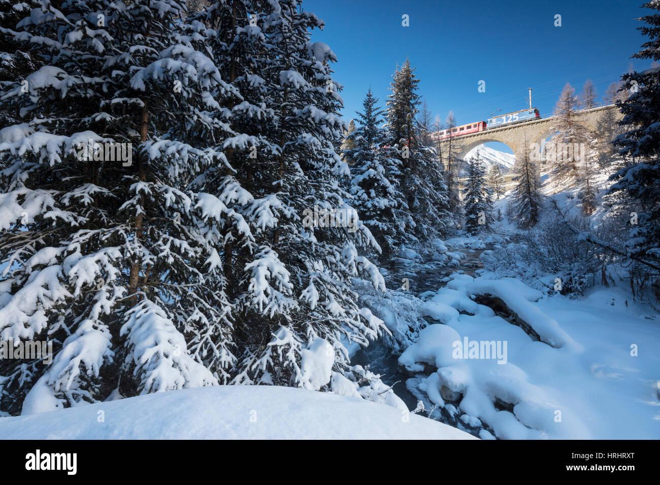Rhätische Bahn auf Chapella Viadukt umgeben von verschneiten Wäldern, Kanton Graubünden, Engadin, Stockbild