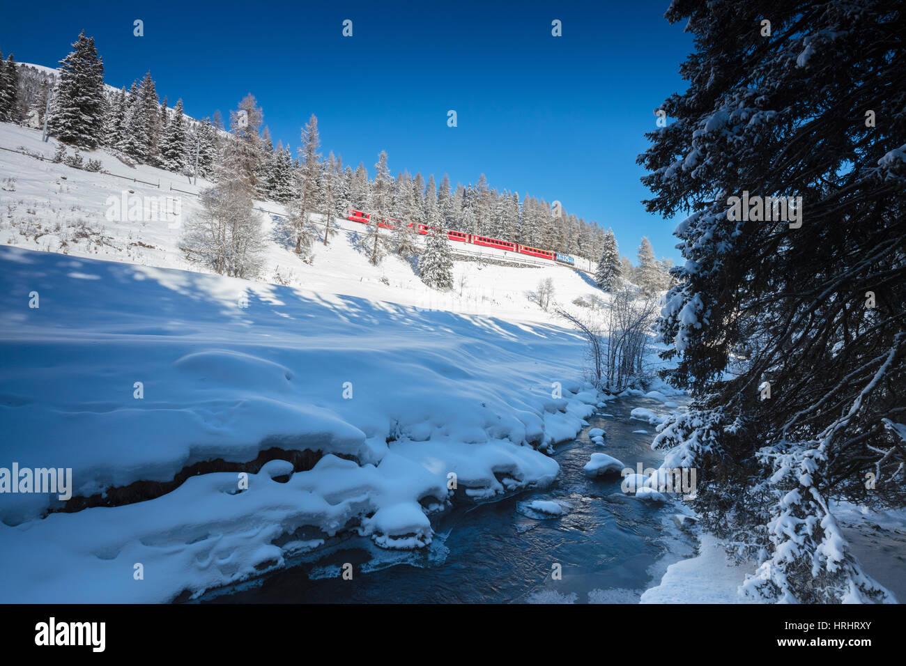Rhätische Bahn auf Chapella Viadukt umgeben von verschneiten Wäldern, Schweiz, Schweizer Alpen, Engadin, Stockbild
