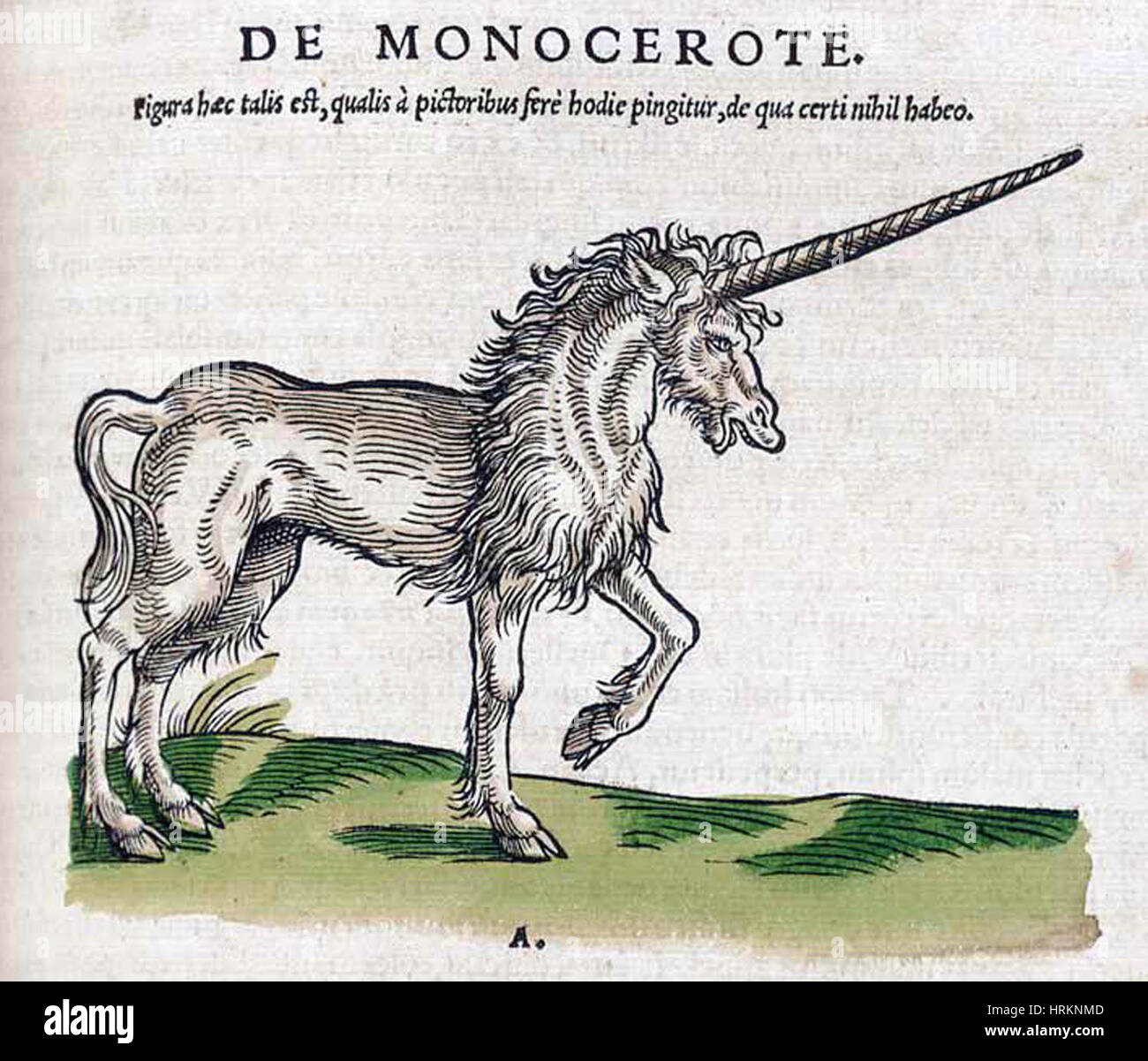 Einhorn, legendäre Kreatur Stockbild