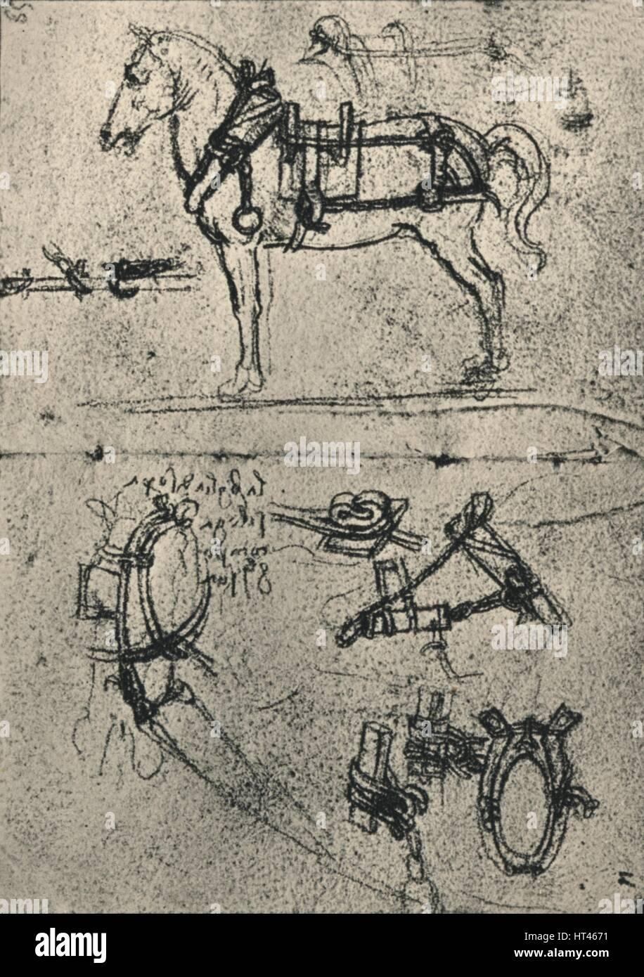 Genutzt-Pferd und Studien der Kabelbaum\