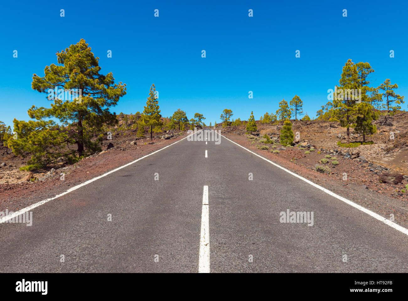 Straße durch vulkanische Landschaft mit Pinien im Parque Nacional del Teide, Teneriffa, Kanarische Inseln, Stockbild