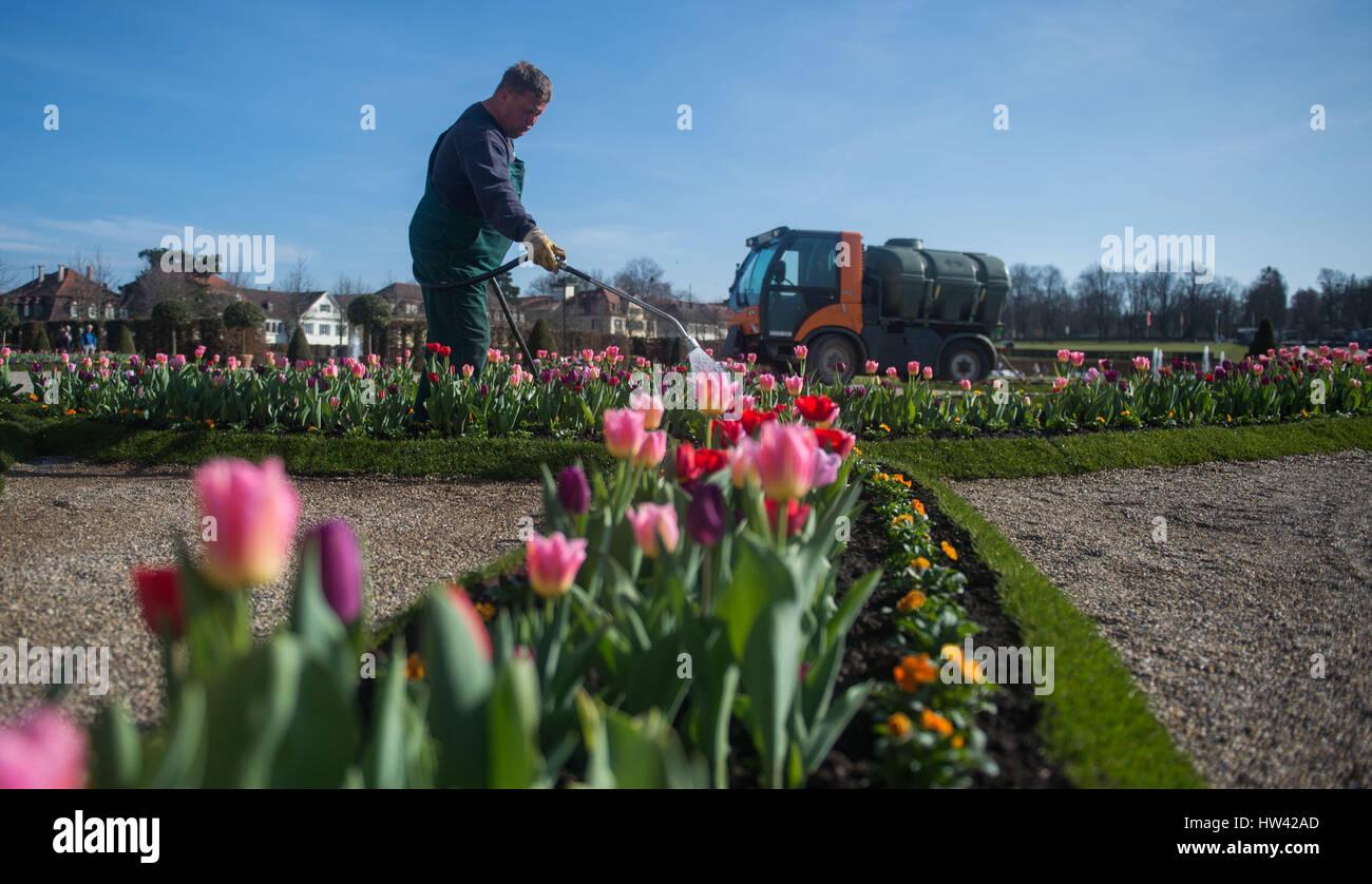 stuttgart deutschland 16 m rz 2017 tulpen und anderen fr hen bl henden blumen die im rahmen. Black Bedroom Furniture Sets. Home Design Ideas