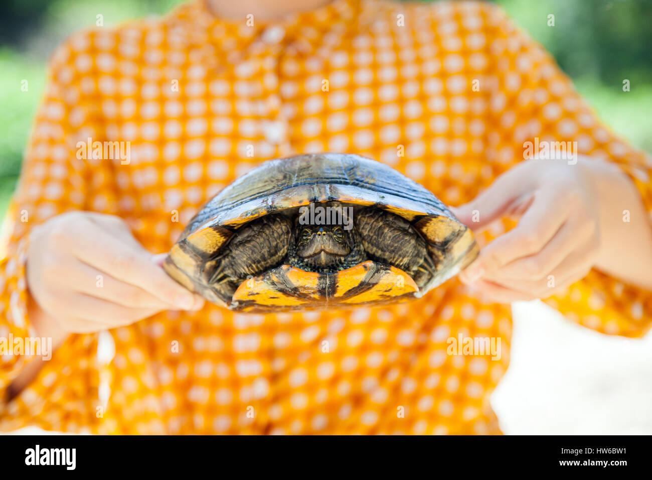 Halten Sie eine Schildkröte Stockbild