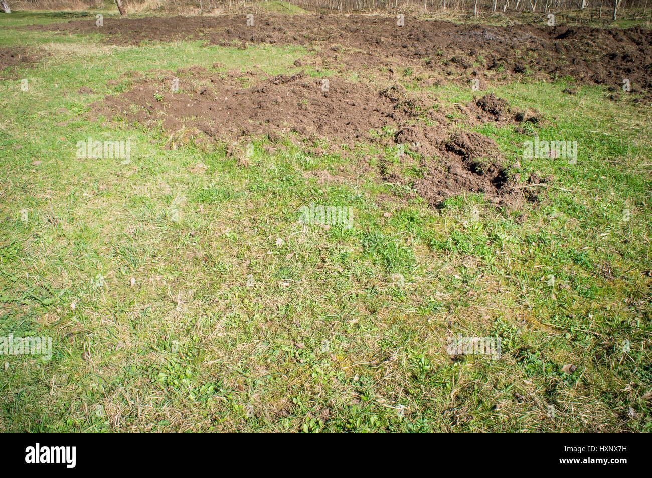 wild boar damage stockfotos wild boar damage bilder alamy