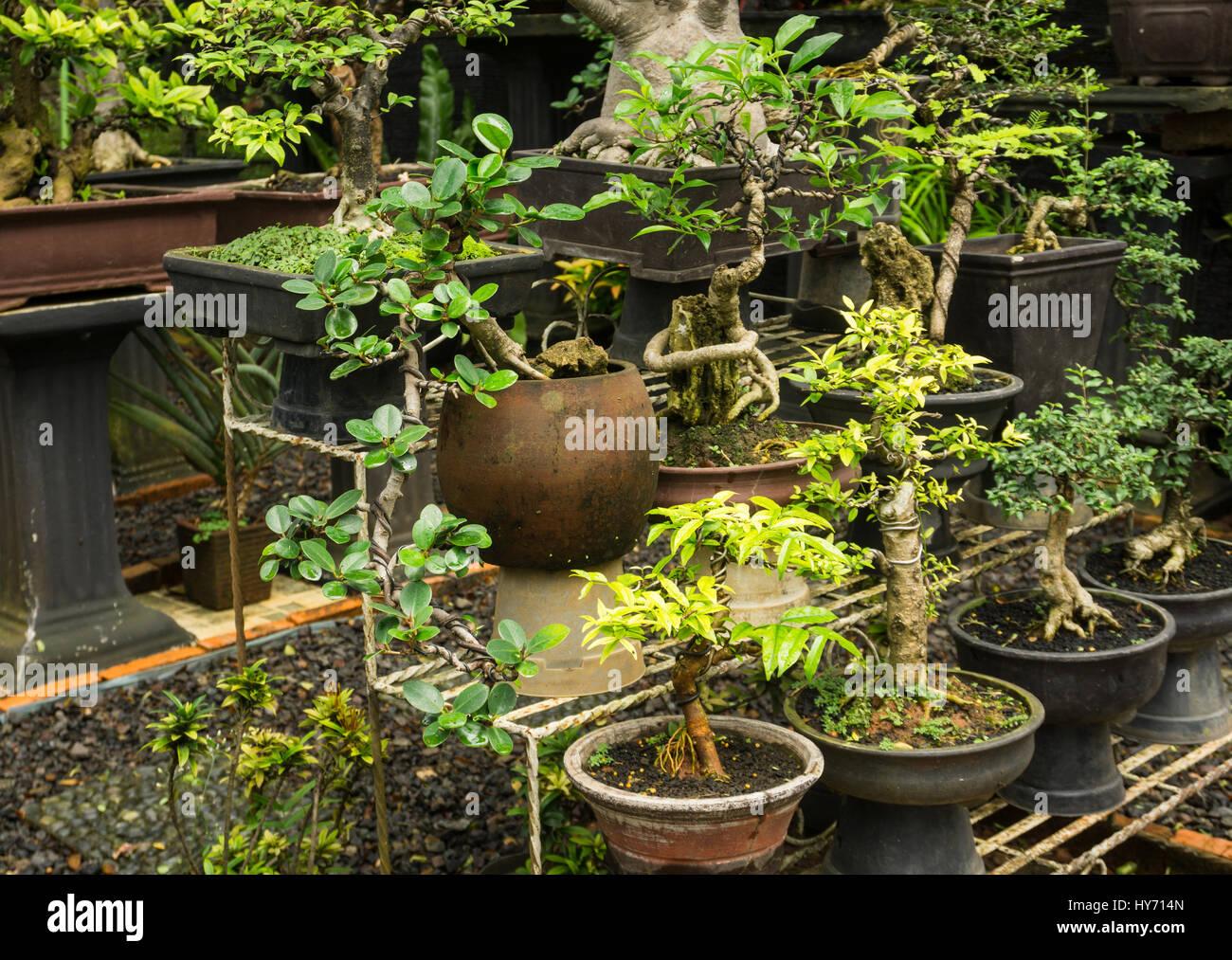 verschiedene arten von bonsai baum zu verkaufen f r zierpflanzen foto in jakarta indonesien. Black Bedroom Furniture Sets. Home Design Ideas