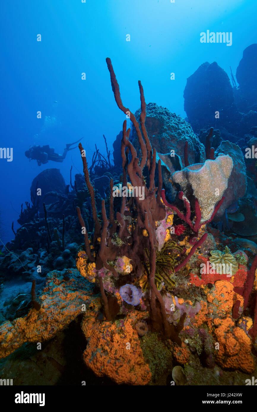Eine Auswahl der Schwämme bilden ein Unterwasser Bouquet. Stockbild