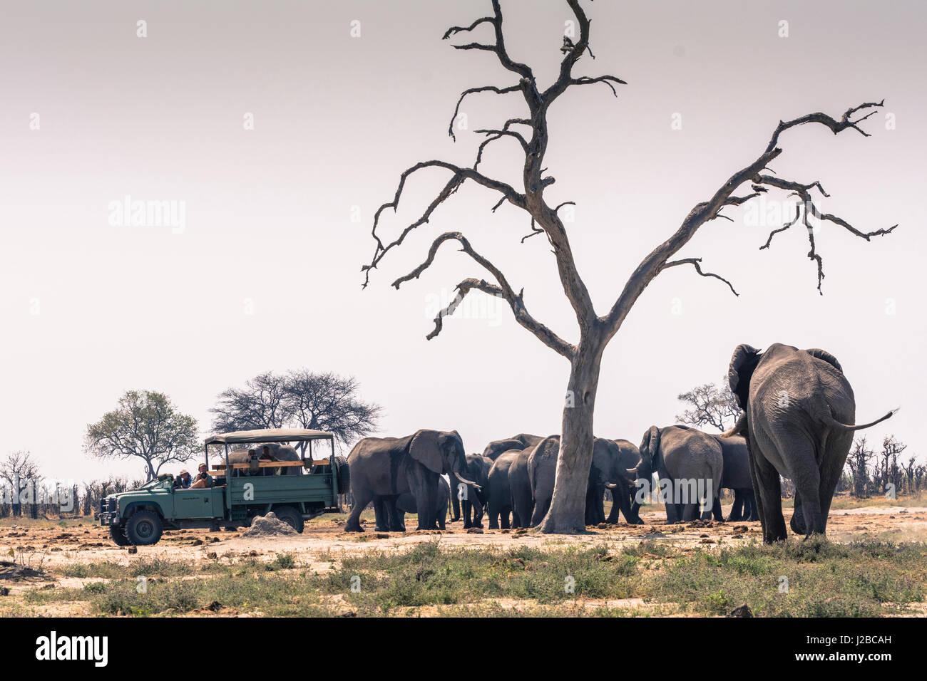 Botswana. Chobe National Park. Savuti. Safari-Fahrzeug und eine Herde Elefanten. Stockbild
