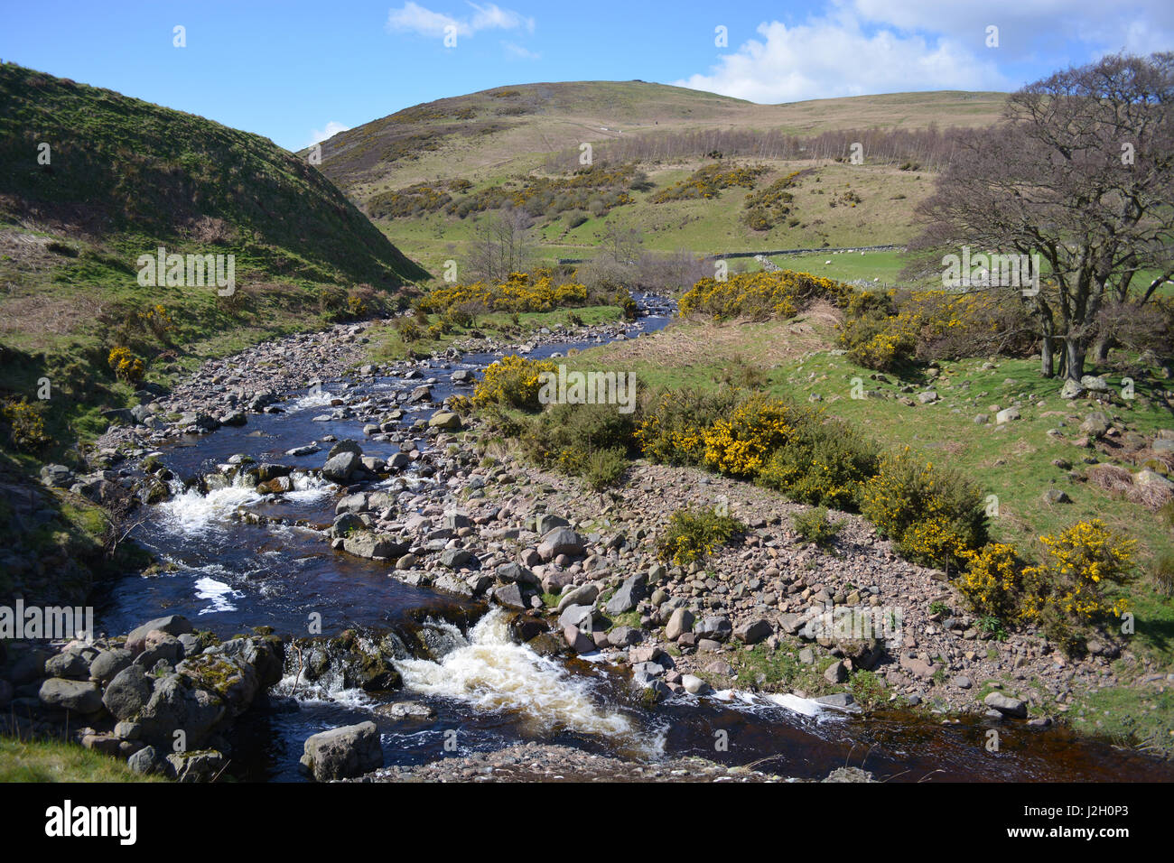 Carey Burn, Cheviots, Northumberland Stockbild