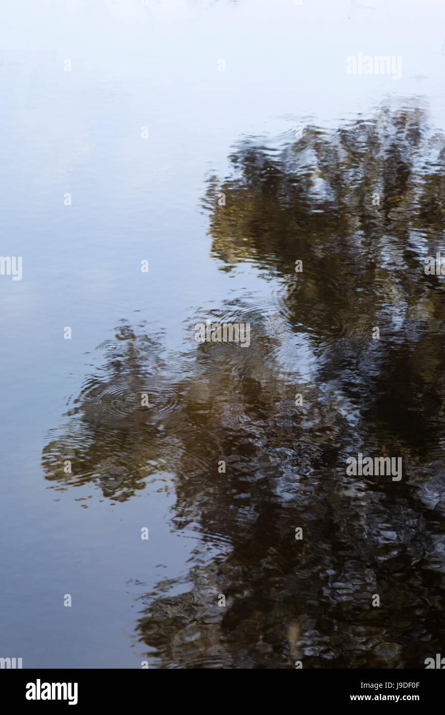 Reflexion eines Baumes im Seewasser. Stockbild