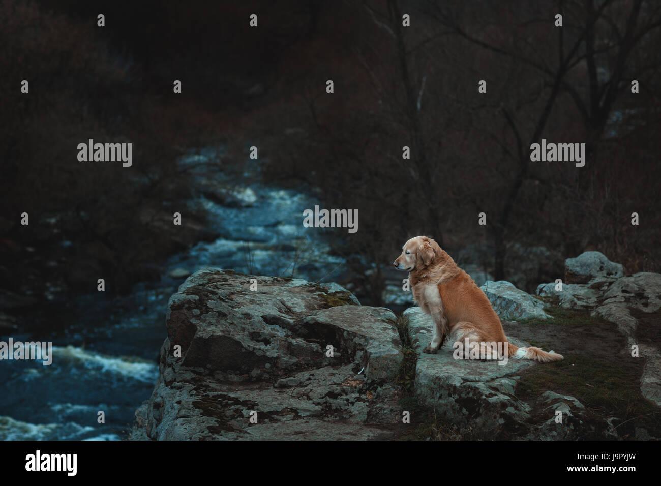 Trauriger Hund sitzt am Rande des Abgrunds. Am unteren Ende der Schlucht fließt der Fluss. Stockbild