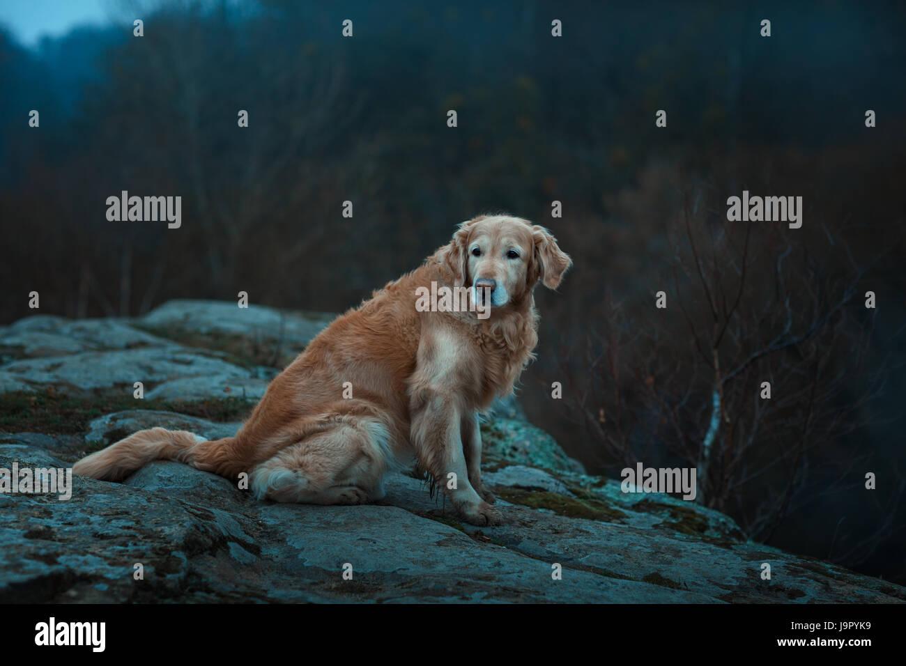 Große rote und trauriger Hund.  Es befindet sich am Rande des Abgrunds. Stockbild