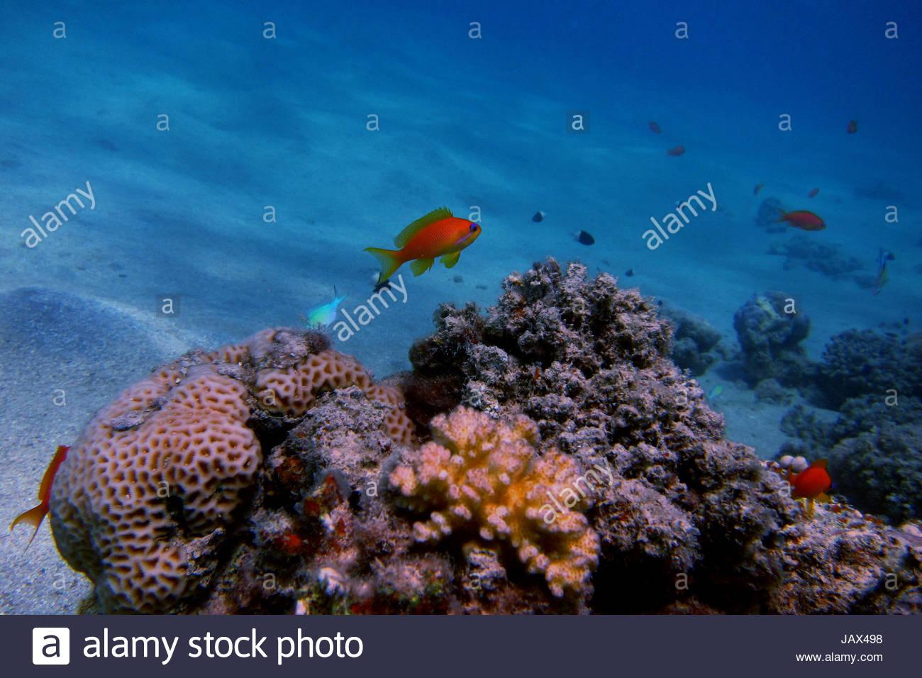 Kleine fische stockfotos kleine fische bilder alamy for Kleine fische