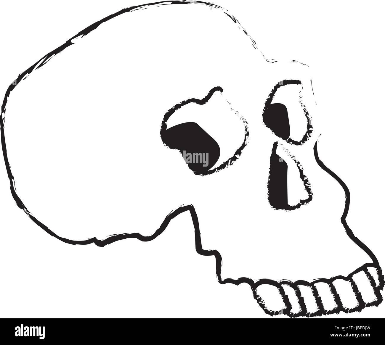 Skizzieren Sie menschlicher Schädel Medizin Anatomie Vektor ...