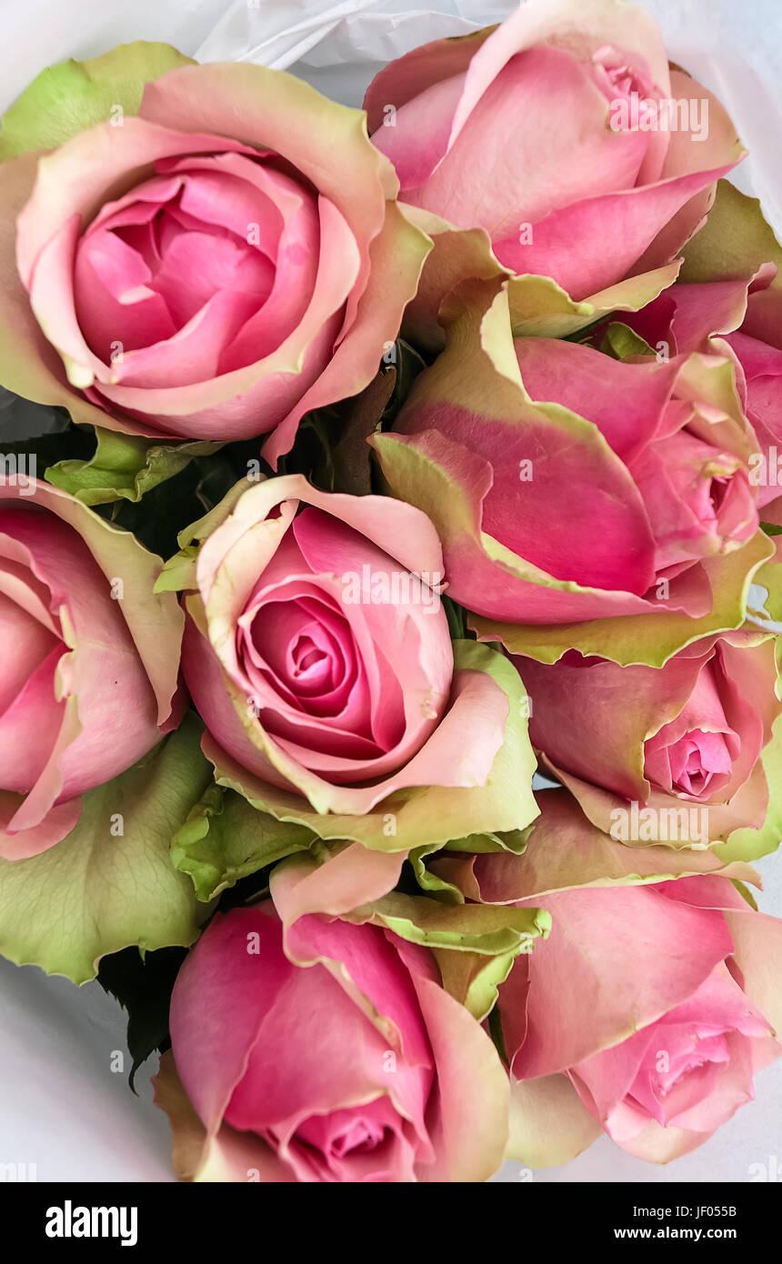 Schöne nostalgische Sträucher Eden Rose Bouquet Stockbild
