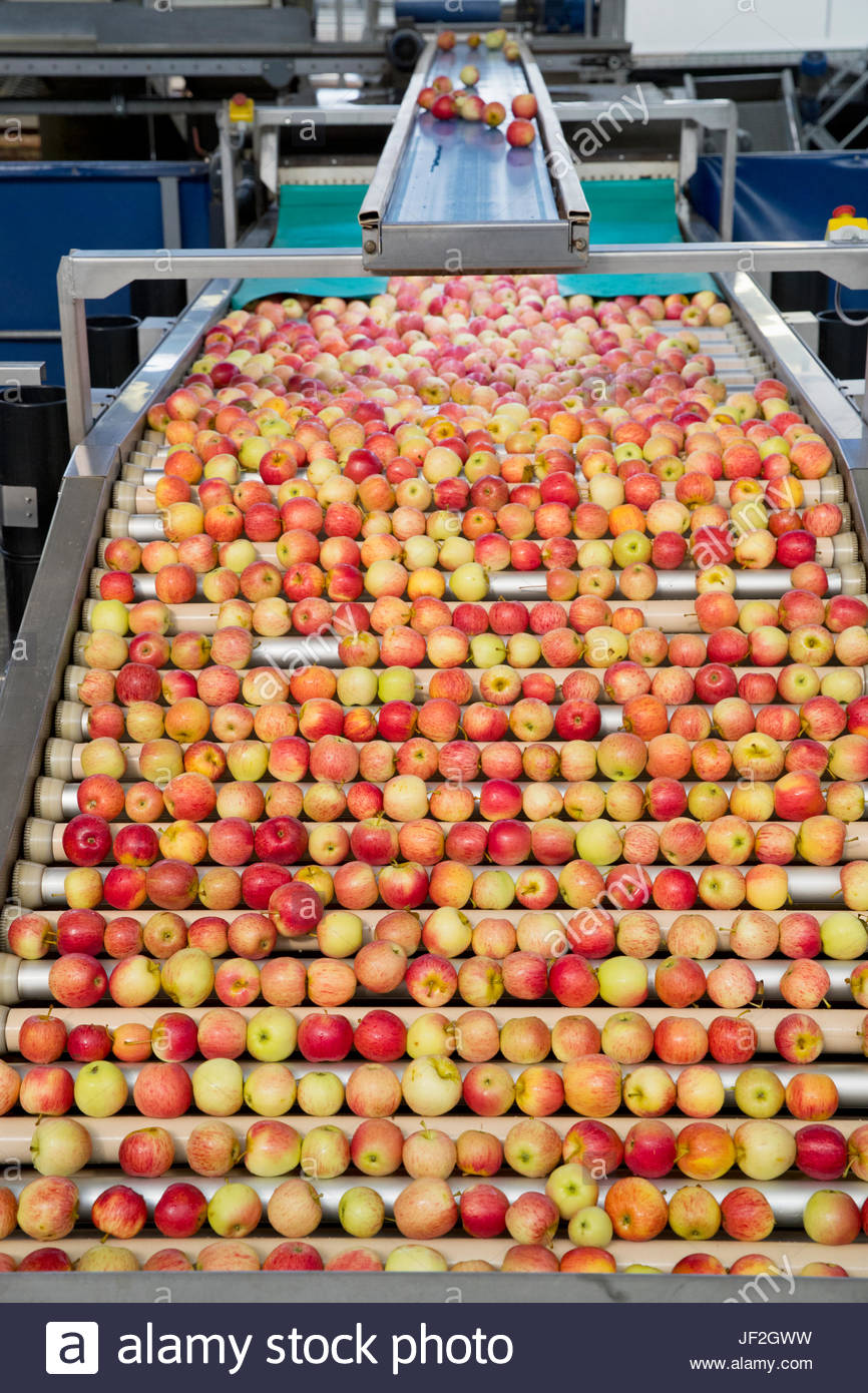 Nahaufnahme von Äpfeln wird gestaffelt In Frucht-Aufbereitungsanlage Stockbild