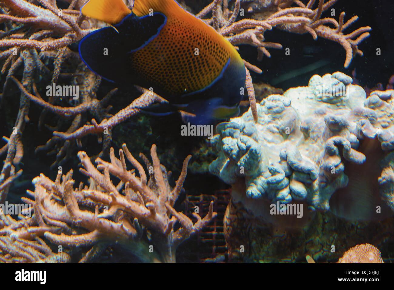 unter wasser geschossen fische in einem aquarium mit korallen und seeanemonen stockfoto bild. Black Bedroom Furniture Sets. Home Design Ideas