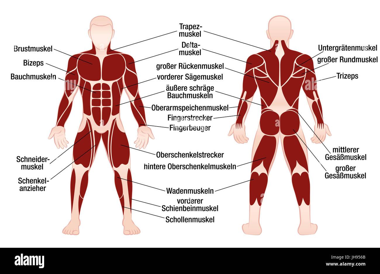 Erfreut Darm Bilder Anatomie Fotos - Menschliche Anatomie Bilder ...