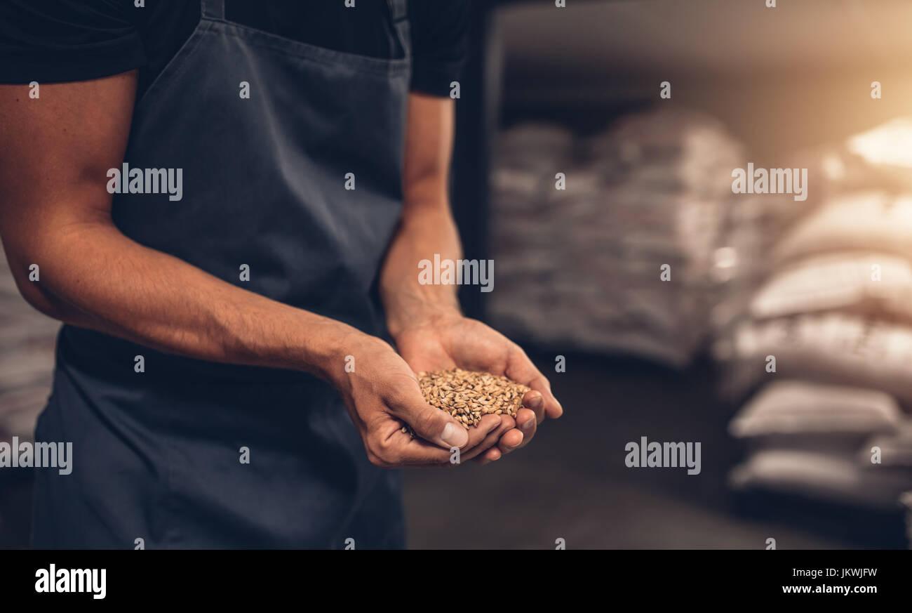 Schuss von Händen der Braumeister mit Gerste Samen hautnah. Mitarbeiter prüfen die Gerste im Brauerei Stockbild