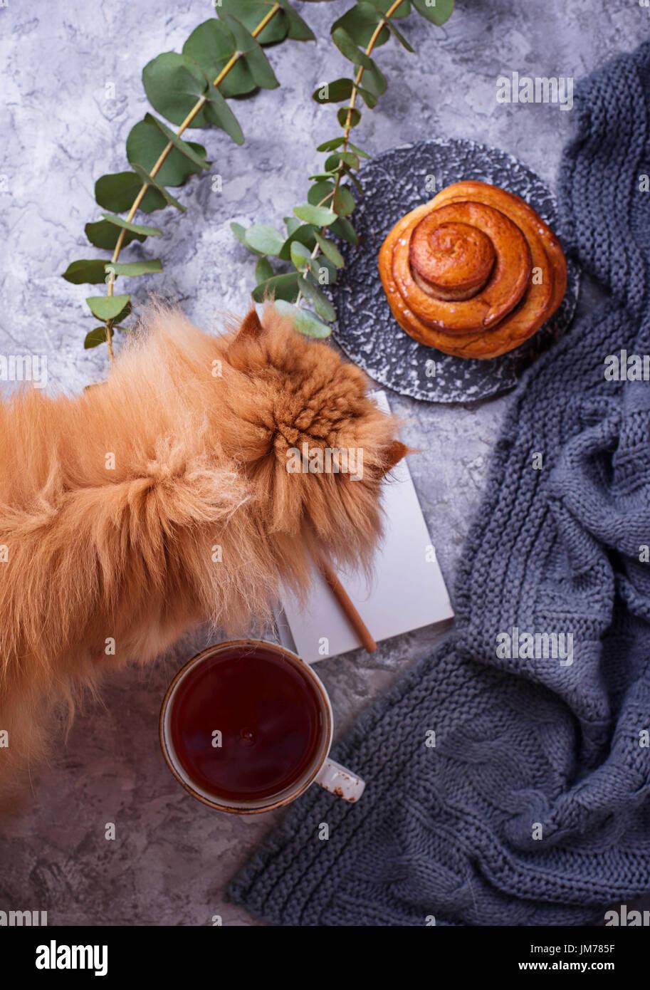 Feminine Arbeitsbereich mit Brötchen, Tee, Notebook und rote Katze. Flach legen, Top Aussicht Stockbild