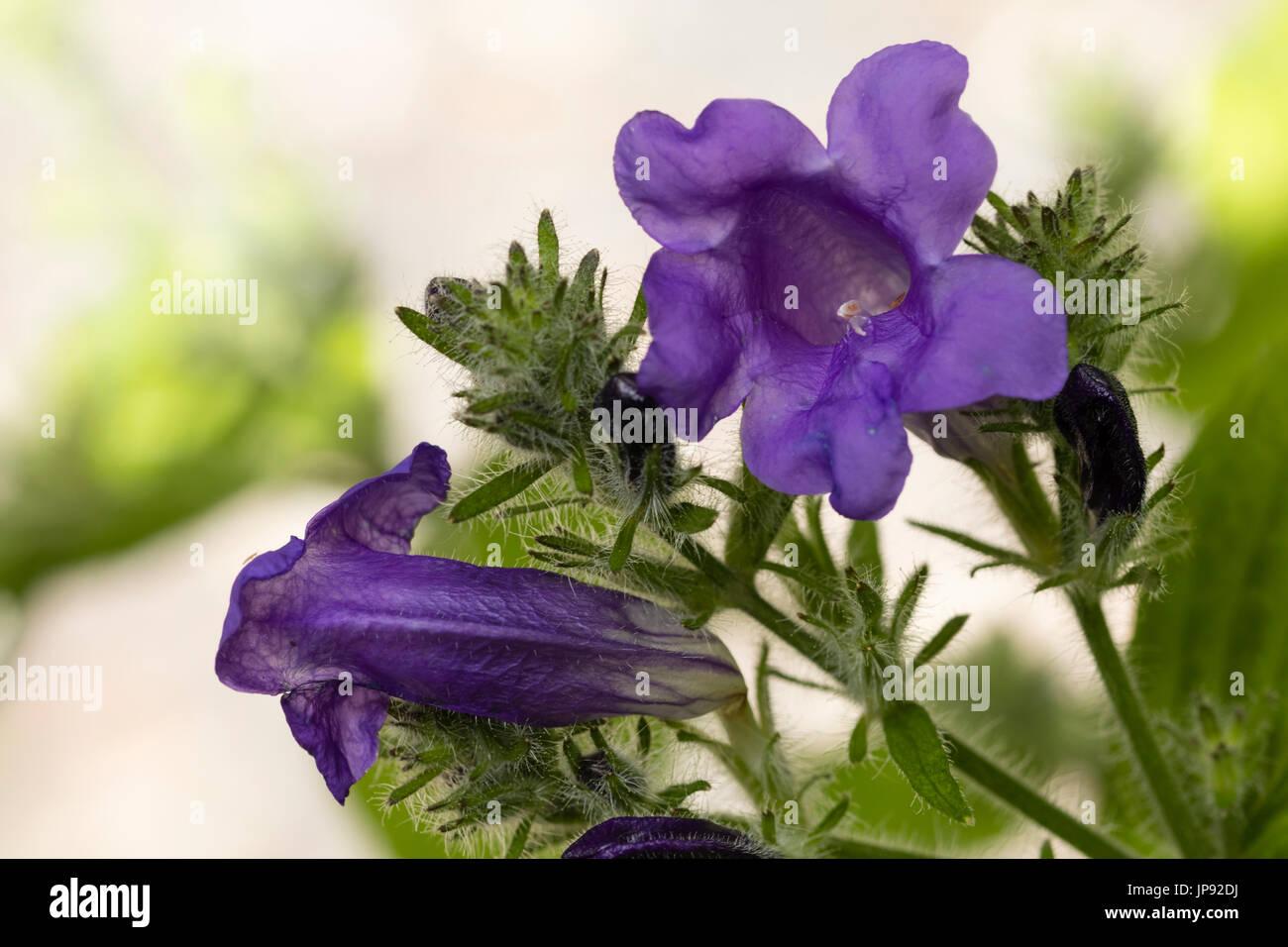 herbaceous stockfotos herbaceous bilder alamy. Black Bedroom Furniture Sets. Home Design Ideas