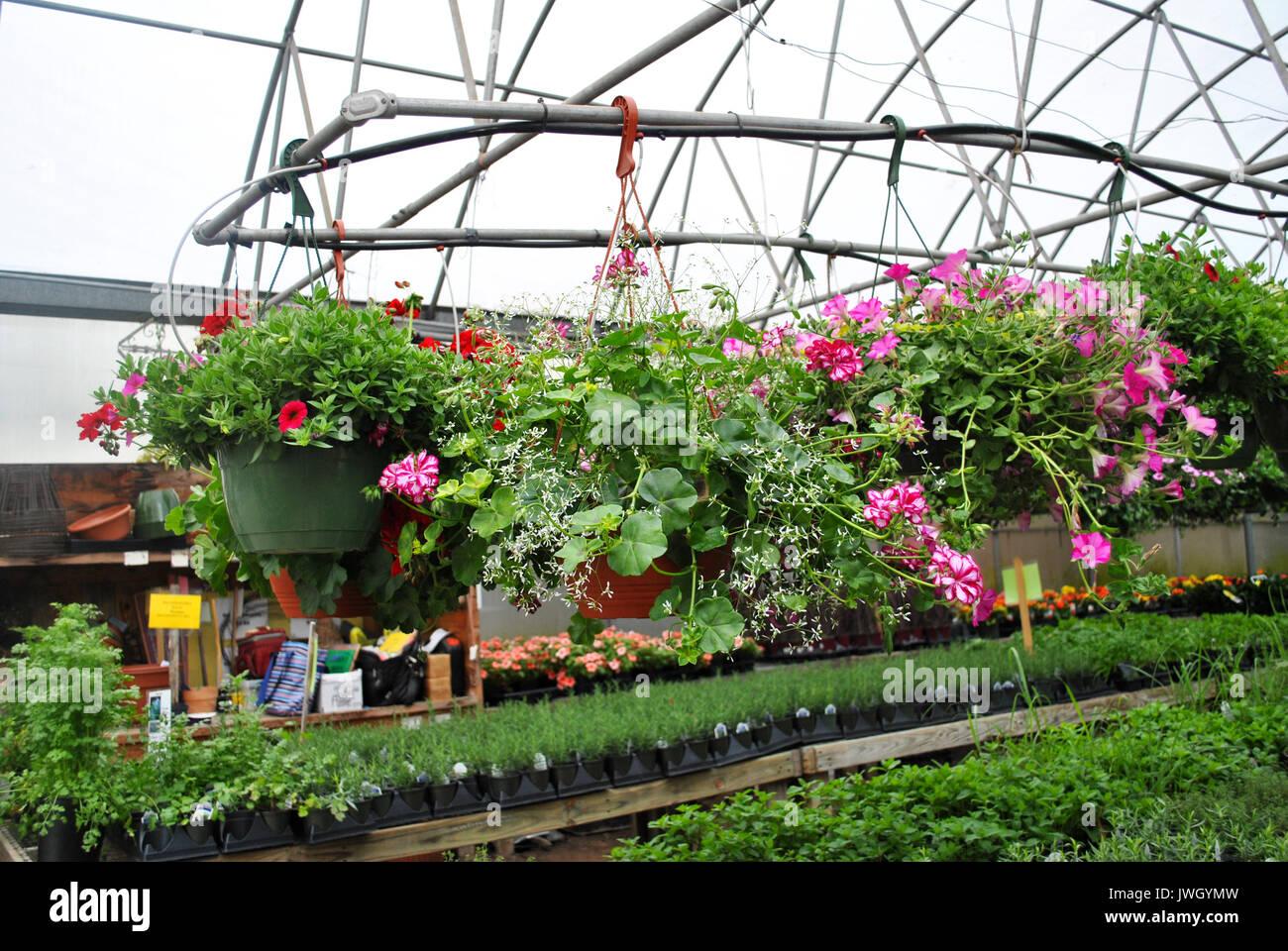 Hangende Gewachshaus Pflanzen Mit Der Workstation Im Hintergrund