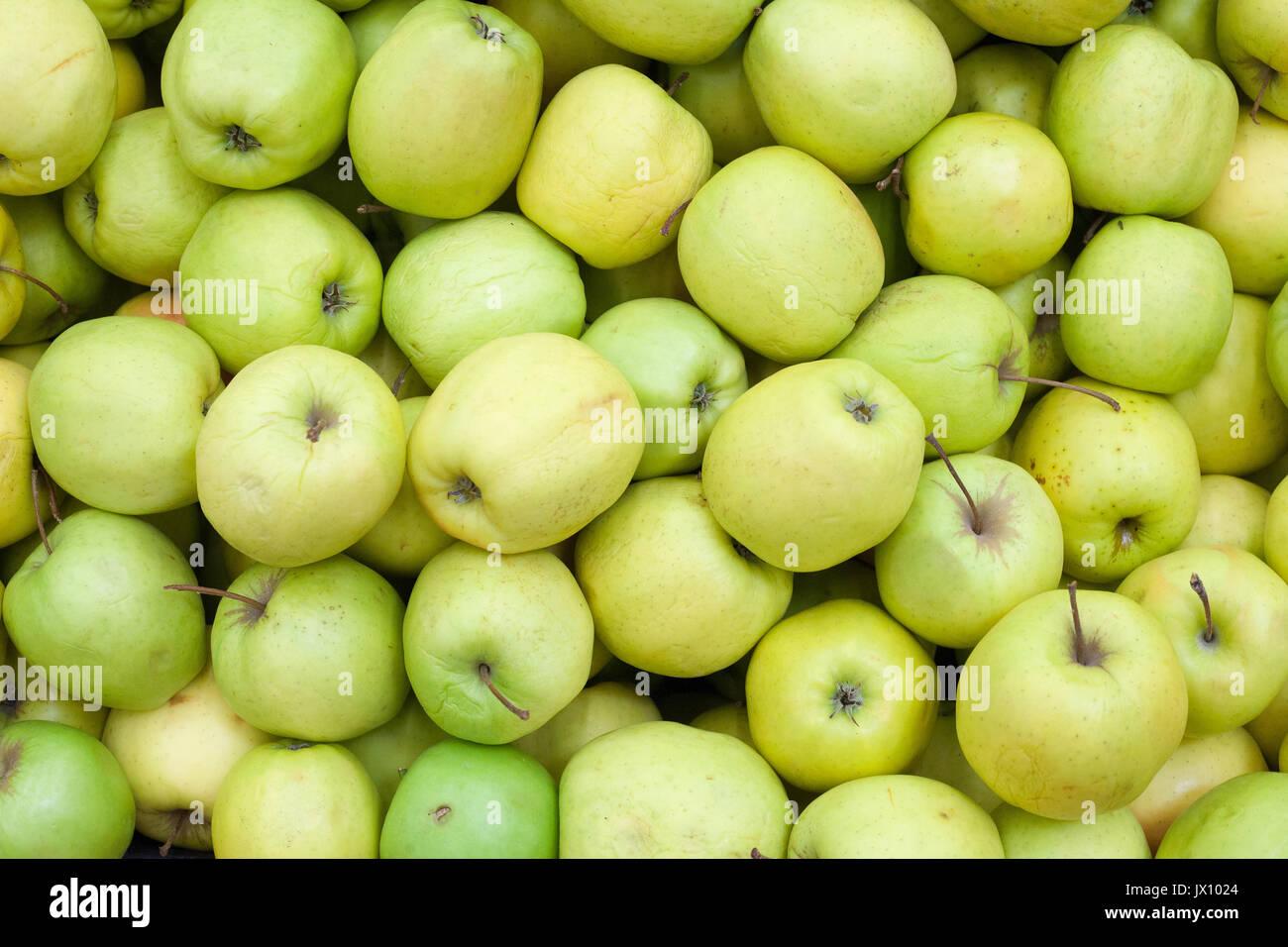 Äpfel Hintergrund Green Apple von rohem Obst und Gemüse Hintergründe overhead Perspektive Stockbild