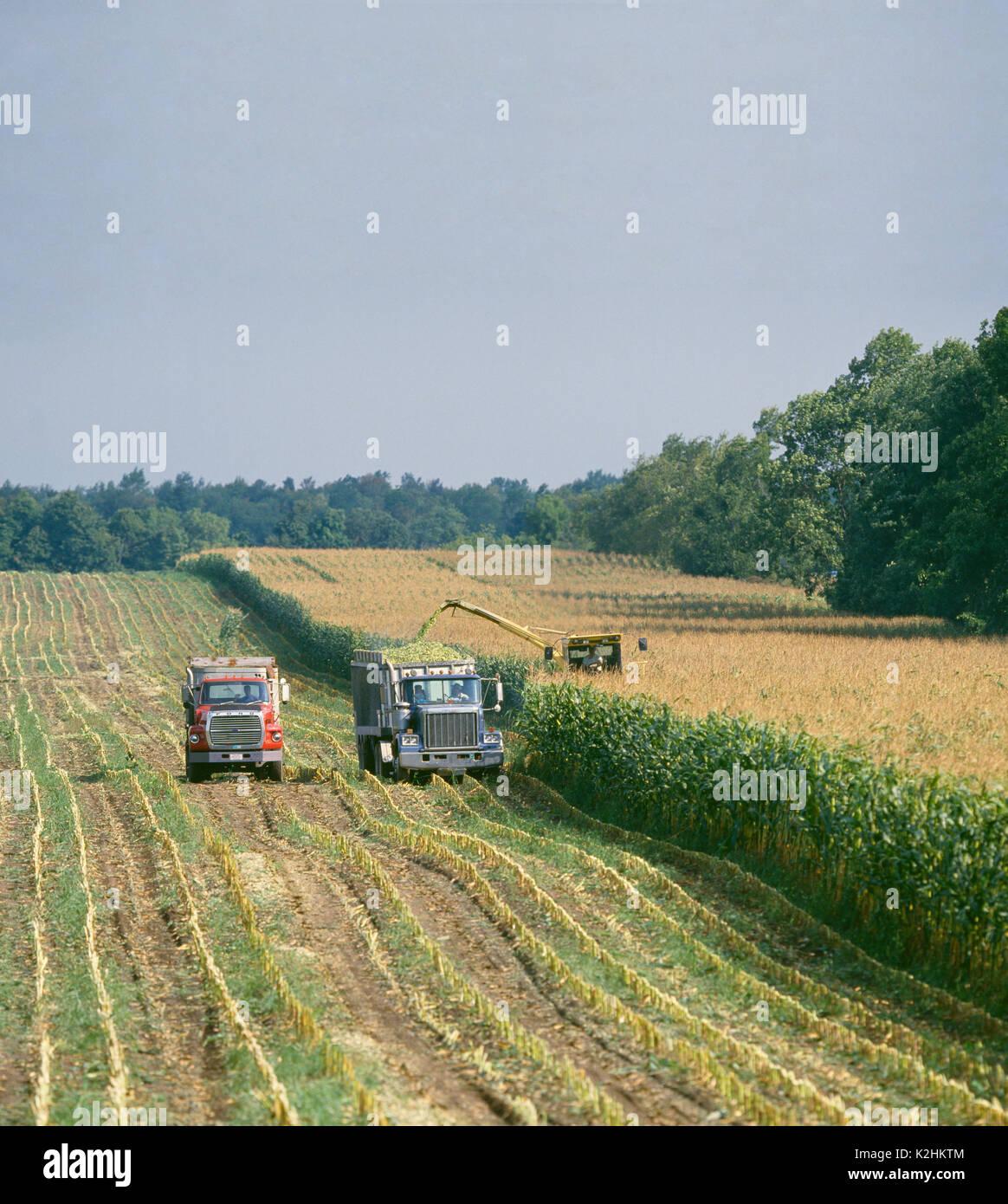 Atemberaubend Maissilage ERNTE ÜBER 2115 NEW HOLLAND SELBSTFAHRENDE HÄCKSLER mit @LP_83
